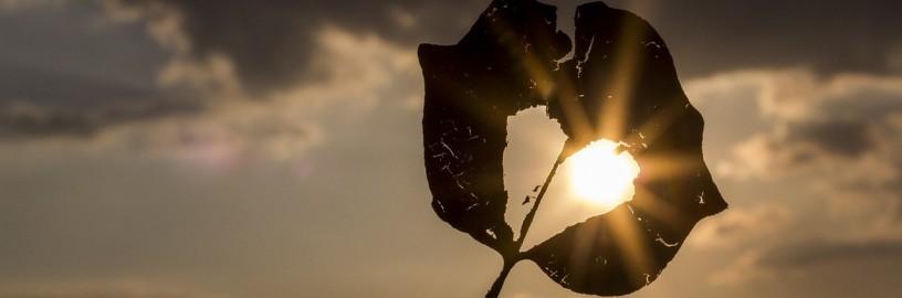 leaf-sun
